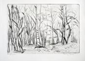 Bäume 2017_bearbeitet-1